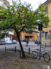 DSCF2347_r (Lancet_) Tags: bologna emiliaromagna street italia città towns paesaggiourbano