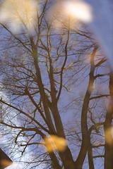 After the rain (Pascal Volk) Tags: berlin althohenschönhausen landsbergerallee berlinlichtenberg árbol baum tree autumnleafcolor herbstfarben herbstlaub autumnleaves hojasdeotoño fallcolors pfütze puddle regajo charco spiegelung reflexion reflection reflexión reflejo réflexion wasserspiegelung reflexióndelagua waterreflection natur nature naturaleza pflanze plant planta herbst fall autumn otoño canoneosr sigma50mmf14dghsm|art 50mmf14 50mmlens unpointquatre onepointfour niftyfifty 50mm canondigitalphotoprofessional