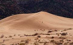 Dune Walkers