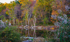 Sterling Forest_6737 (smack53) Tags: smack53 sterlingforestpark rocklandcounty autumn autumnseason fall fallseason fallcolors trees foliage nikon d300 nikond300 newyork