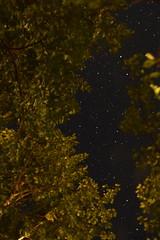 DSC_1229 (l_napishvili) Tags: nightsky sky stars