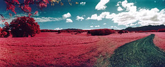 Infrared Hawaii (The 69th Dimension) Tags: filmphotography film analog 35mm infrared colorinfrared hawaii kauai landscape panorama widelux