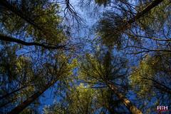 Rondje in het Leuvenumse bos (Richard van Hilten) Tags: holland netherlands thenetherlands gelderland bos herfst