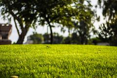Bright Hill (benakersphoto) Tags: az arizona grass sunset green yellow golden color colorful colours colourful colour colors nikon nikkor bokeh