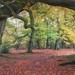 Shoal Hill Reserve, Cannock