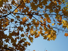 tree&sky (cloversun19) Tags: gold rain animal field grass landscape branches leafs foliage sky russia russian spb tree walking country holiday holidays park garden dream dreams positive forest happy view grey legend fairytale fir firtree birch village evening romantic october september car road street blue maple leaves town city light sun yellow autumn trees