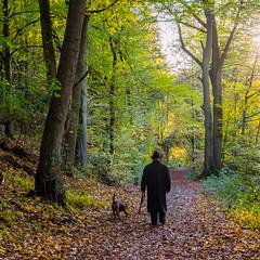 going for a walk (marinachi) Tags: sundaylights somethingfortheweekend walk november bochum trees green yellow woods cof043dmnq cof043cg cof043ally