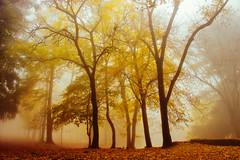 Luce nel bosco (Marco Allegro) Tags: