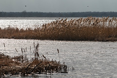 Lake Overholster (Gary P Kurns Photography) Tags: myoklahoma lakeoverholster oklahomacity 200500lens nikon places oklahoma nikond500