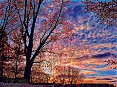 brilliant sunset (angelinas) Tags: sunset sky tree silhouettes cloudscape ciel colors prismaart prisma digitalapainting digitalartwork photomanipulation artwork artistic pastels tramonti coucherdesoleils