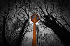 Farol naranja (ArturoHCordero) Tags: farol lantern naranja orange colorselectivo selectivecolor mexico zacatecas canon t7i arboles trees naturaleza nature