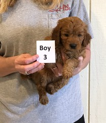Darby Boy 3 pic 2 12-9