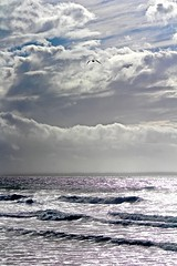 In Between the Squall Lines Heading South (iseedre) Tags: stormcloudsandsurf rain seagull