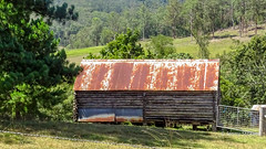 Rusty shed near Beechwood, NSW, Australia (Jenny Stokes Melbourne) Tags: australia australian heritage historic landscape newsouthwales relic ruin rusty sky summer tree trees