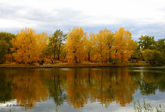 Reflections in Carburn Park (pamfromcalgary) Tags: landscape scenery carburnpark water reflections pamhawkes