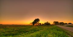 Shy sunset hiding behind the trees. (Alex-de-Haas) Tags: 11mm adobe blackstone d850 dutch hdr holland irix irix11mm lightroom nederland nederlands netherlands nikon nikond850 noordholland photomatix photomatixpro beautiful beauty drama dramatic landscape landschaft landschap lente lucht mill molen mooi nature natuur orange oranje polder skies sky skyscape spectaculair spectacular spring sun sundown sunset warm zonsondergang