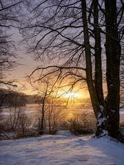 Morning light, Norway (Vest der ute) Tags: xt2 norway rogaland haugesund djupadalen lake sunrise trees tree snow winter morning ice sunbeams fav25 f fav200