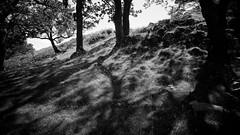 Trees and shadows (khrawlings) Tags: trees shadows bw blackandwhite monochrome gwynedd snowdon wales hillside