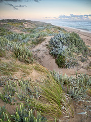 geltwood - 2387 (liam.jon_d) Tags: australia australian beach billdoyle canunda canundanationalpark coast coastal dune foredune geltwood geltwoodbeach landscape landscapeimset nationalpark outdoor pickmeset sa sanddune sandy seashore shore southaustralia southaustralian