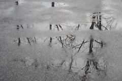 Sula Mörbischis (anuwintschalek) Tags: nikond7000 d7k 18140vr austria burgenland mörbisch mörbischamsee neusiedlersee seebadmörbisch see järv lake talv winter january 2019 sula thaw tauwetter parkimisplats parkplatz lomp pfütze puddle peegeldus reflection spiegelung