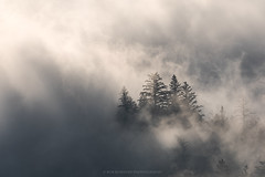 Obscurity (Bob Bowman Photography) Tags: fog mist trees light obscurity mystery atmosphere rise reveal landscape sonomacounty california nikon