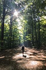 Autumnwalk (Thea Teijgeler) Tags: autumn herfst autumnwalk herfstwandeling groesbeek bos bomen