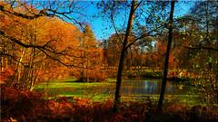 Autumn  magic colours at  the forest pond (Ostseetroll) Tags: deu deutschland geo:lat=5395086698 geo:lon=1003866949 geotagged schleswigholstein weide wildparkeekholt herbst waldteich herbstfarben teich autumn forest pond colours olympus em10markii