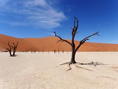 P1107661-LR (carlo) Tags: namibia panasonic dmcg9 g9 africa desert deserto landscape africanlandscape sossusvlei deadvlei