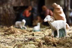 Beeh! (wimjee) Tags: nikond7200 nikon d7200 afsdx1680mmf284eedvr kerstmis kerststal schaap christmas manger nativityscene