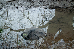 It's Deeper Than it Looks. (mrdamcgowan) Tags: umbrella puddle london londonist capitalring drfoster