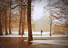 A Walk in the Park (Clare-White) Tags: snow winter one trees white rustic amsterdam weather alone