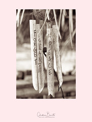 Forget [Forgive], Cleanse, Peace (Elf-8) Tags: message zen meditation bamboo wish hope freidship costarica