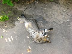 IMG_12576 (marina_pavlova) Tags: vladimir russia cats
