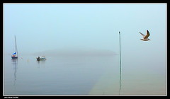 Matin Brumeux...... (faurejm29) Tags: faurejm29 canon sigma sea seascape brume paysage nature mer matin