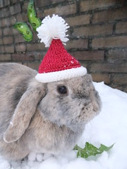 The perfect Season's Greetings card (eveliensbunnypics) Tags: bunny rabbit lop lopeared polly outdoor outside backyard patio winter snow christmas hat christmashat crochet crocheted posing