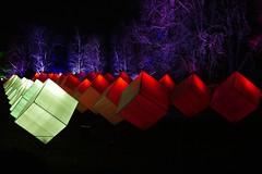 Illuminated cubes in the night (JB Fotofan) Tags: 2018 lights licht fz1000 lumix trees bäume nacht nightshot winterlichter frankfurt palmengarten cubes würfel