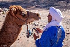 You Talking to Me ? (John French 108) Tags: ourika marrakeshtensiftelhaouz morocco camel atlas mountains dromedary ungulate turban animal berber hump desert beastofburden nature