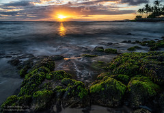 pau ana o ka lā (Darren Barnes Photography) Tags: pau ana o ka lā pauanaokalā dwoodphotography dwoodphotographycom seascape pacific ocean pacificocean 2018 kauai hawaii green moss sunset blue yellow sunstar