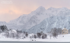 A Winter's Walk (Darren Barnes Photography) Tags: a winters walk awinterswalk norway lofoten dwoodphotographycom dwoodphotography 2017 yellow snow ice mountain mountains evergreen house