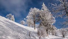 Les arbres façon sucre glace (mrieffly) Tags: hautrhin hautesvosges alsace lemassifdugrdballon neige canoneos50d