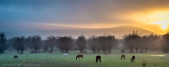 Grazing horses #4 (Ignacio Ferre) Tags: caballo horse manzanareselreal madrid españa spain grazing pastando naturaleza nature nikon sunset puestadesol atardecer landscape paisaje