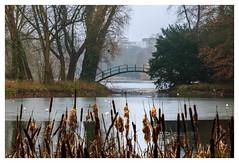Damaged bridge 2 (cstevens2) Tags: antwerp antwerpen antwerpenprov anvers belgique belgium belgië deurne europe flanders flandre park rivierenhof tree vlaanderen bomen boom bridge brug parc trees