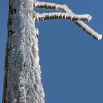 Frozen wood thumbnail