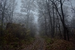 Foggy forest road (Alex Levenko) Tags: track way nature branches branch fog autumn leaves trees tree road forest foggy day