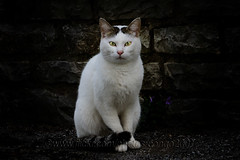 Cat Woman (pongo 2007) Tags: cat white pongo2007 abbandoned