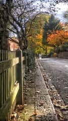 Morning light reflects off Greenhill (marc.barrot) Tags: tree fence street uk nw3 london hampstead hampsteadhighstreet greenhill