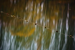 Les perles du lac (KinOreve) Tags: automne automn herbst reflet reflection kinoreve