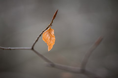 final flame (Emma Varley) Tags: leaf winter amber glow flame fire bright warming cheer forest autumn
