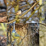 Small Birds out in force today. #hwcp. thumbnail