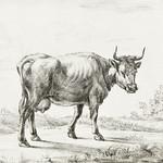 Cow by Jean Bernard (1775-1883). Original from The Rijksmuseum. Digitally enhanced by rawpixel. thumbnail
